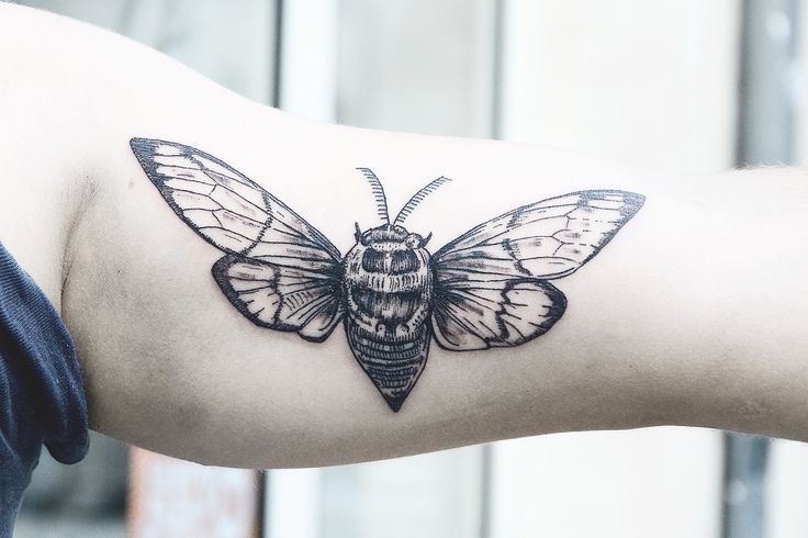 insect tattoos photo - 36