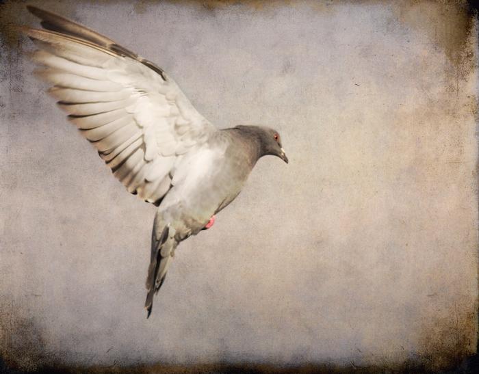 pigeon tattoos photo - 31