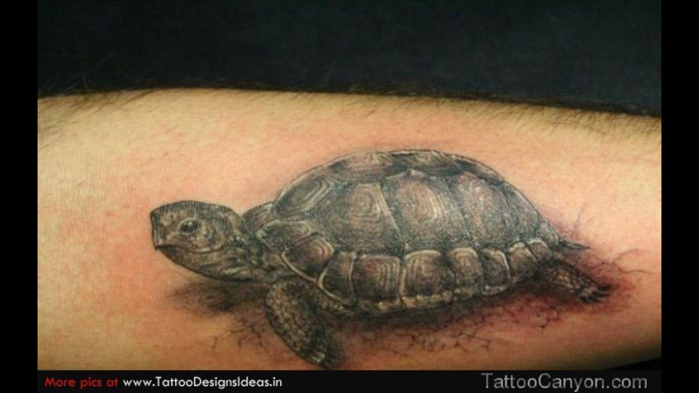 turtle tattoos photo - 25